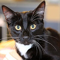 Adopt A Pet :: Nettie - Pacific Grove, CA