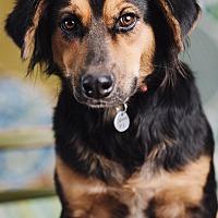 Adopt A Pet :: Pedro - Portland, OR