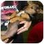 Photo 3 - Dachshund/Terrier (Unknown Type, Small) Mix Dog for adoption in Humble, Texas - Mia