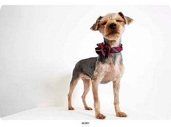 Yorkie, Yorkshire Terrier Dog for adoption in New York, New York - Wendy