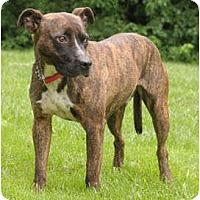 Adopt A Pet :: Junior - Chicago, IL