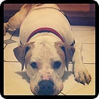 Adopt A Pet :: Bruce - Bloomsburg, PA