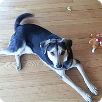 Adopt A Pet :: Tucker(ADOPTED!) - Chicago, IL