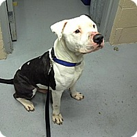 Adopt A Pet :: Hank - Berlin, CT