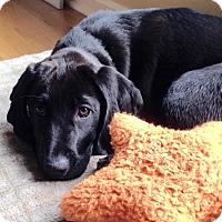 Adopt A Pet :: *Tessa - PENDING - Westport, CT
