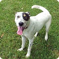Adopt A Pet :: Roscoe - Franklin, KY