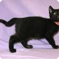 Adopt A Pet :: Koki - Powell, OH