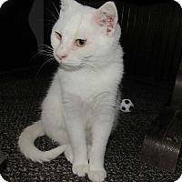 Adopt A Pet :: Opi - Norwich, NY