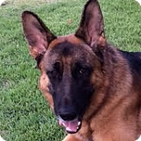 Adopt A Pet :: Max-Referral - Dripping Springs, TX
