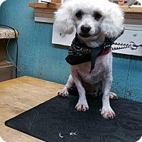 Adopt A Pet :: Pierre - Crump, TN
