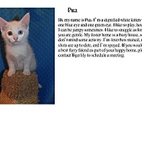 Adopt A Pet :: Pua - Sterling Heights, MI
