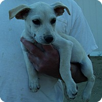 Adopt A Pet :: SUMMER PUPS B - Corona, CA