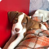 Adopt A Pet :: JADA - Portsmouth, NH