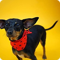 Adopt A Pet :: Buster - Whitehall, PA