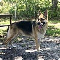 Adopt A Pet :: Parker - Orlando, FL