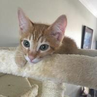 Adopt A Pet :: Mimosa - Bulverde, TX