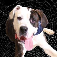 Adopt A Pet :: Theo - Chico, CA
