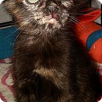 Adopt A Pet :: Ola - New Smyrna Beach, FL