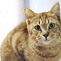 Adopt A Pet :: LIPSY - Tavares, FL