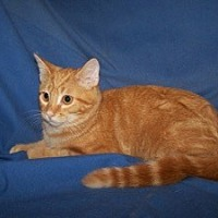 Adopt A Pet :: Isabel - Colorado Springs, CO