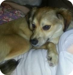 Spaniel (Unknown Type) Mix Dog for adoption in Encino, California - Jones