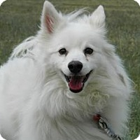 Adopt A Pet :: Chester - Cheyenne, WY