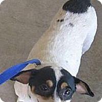 Adopt A Pet :: Tina - Stilwell, OK