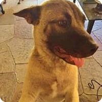 Adopt A Pet :: Batman - Garland, TX