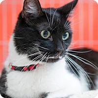 Adopt A Pet :: Hugo - Santa Ana, CA