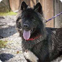 Adopt A Pet :: Romeo - Toms River, NJ