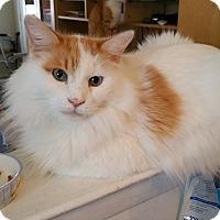 Adopt A Pet :: Marshmallow - Philadelphia, PA