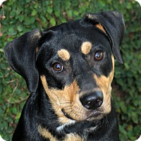 Adopt A Pet :: Rocky - Natchitoches, LA