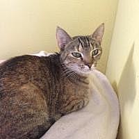 Adopt A Pet :: Missy - Hudson, FL