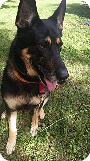 German Shepherd Dog Dog for adoption in Kansas City, Missouri - Hunter