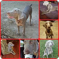 Adopt A Pet :: LiLi - Inverness, FL