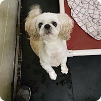 Adopt A Pet :: Sailor - Caledon, ON
