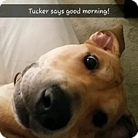 Adopt A Pet :: Tucker (COURTESY POST) - Baltimore, MD