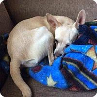Adopt A Pet :: kassy - Sacramento, CA