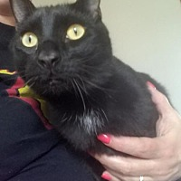 Adopt A Pet :: Finley - Battle Ground, WA