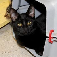 Adopt A Pet :: Garth - Belleville, MI