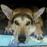 Adopt A Pet :: Stuart - Darien, CT
