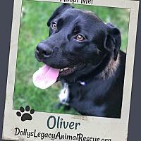 Adopt A Pet :: OLIVER - Lincoln, NE