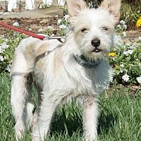 Adopt A Pet :: Tobias - Palo Alto, CA