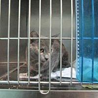 Adopt A Pet :: SILVER - Fort Walton Beach, FL