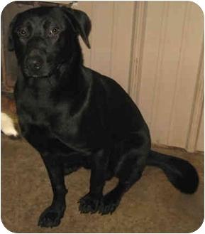 Labrador Retriever Mix Dog for adoption in Tahlequah, Oklahoma - Happy