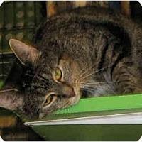 Adopt A Pet :: Krista - Catasauqua, PA