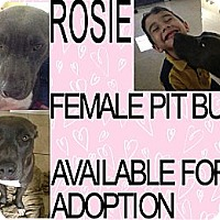 Adopt A Pet :: ROSIE - Hollywood, FL