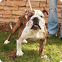 Adopt A Pet :: Pippa - Lancaster, OH