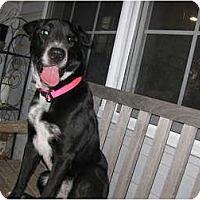 Adopt A Pet :: Peggy - Inola, OK