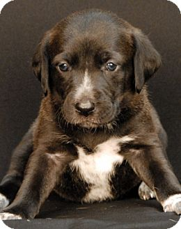 Hound (Unknown Type) Mix Puppy for adoption in Newland, North Carolina - Wrigley